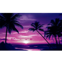 Fototapeta Beach Tropical Sunset Palms 368 x 254