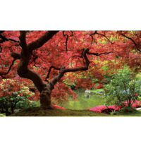 Fototapeta Japanese Maple Tree 368 x 254