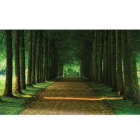 Fototapeta Path Trees Forest 368 x 254